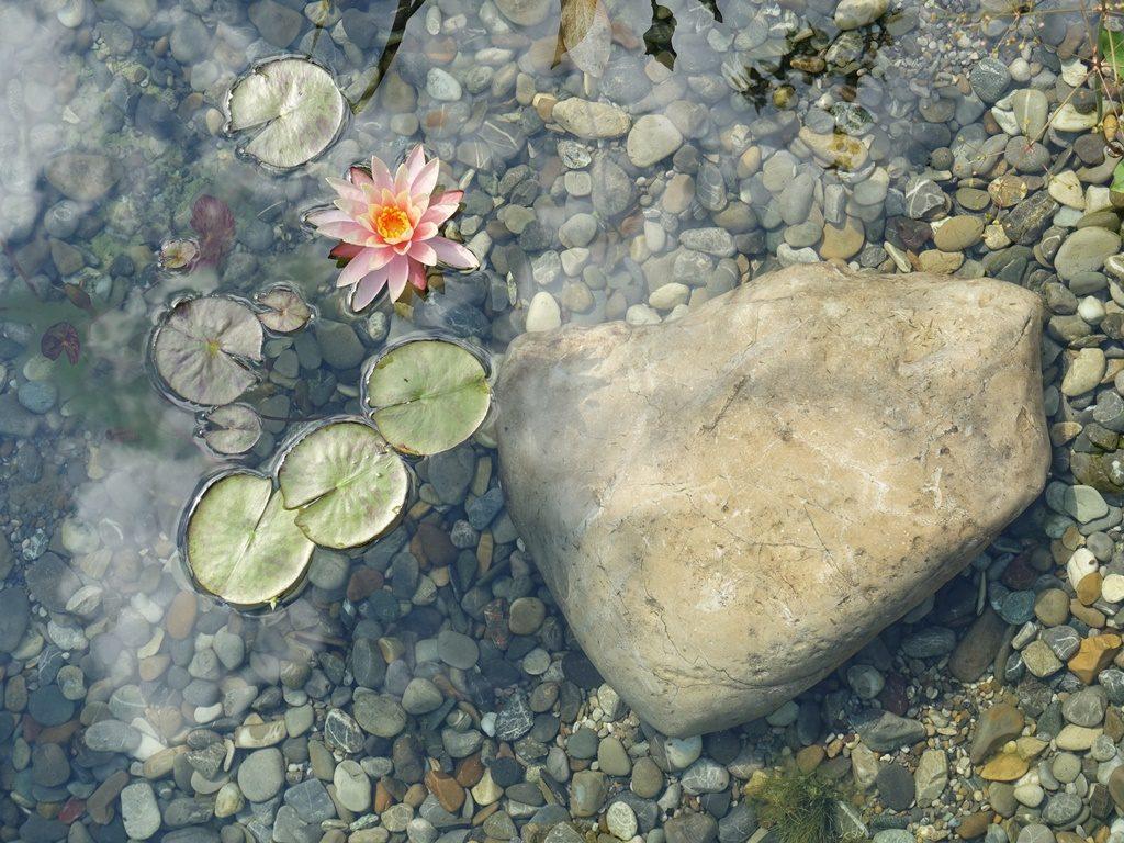 Wasserpflanzen und Stein in Kiesbett