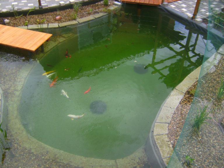 Fertiger Schwimmteich mit Fischen