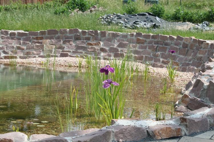 Fertiger Teich; Wasserpflanzen
