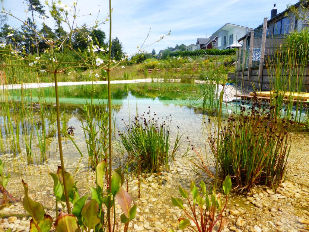Fertiger Schwimmteich mit Pflanzen