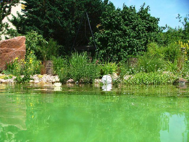 Begrünter Teich