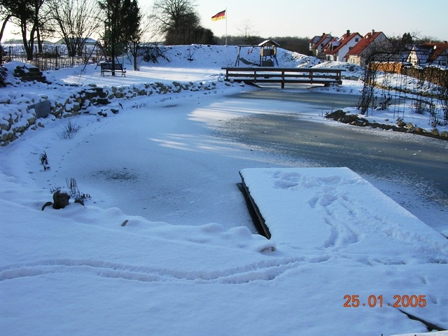 Teich im Winter